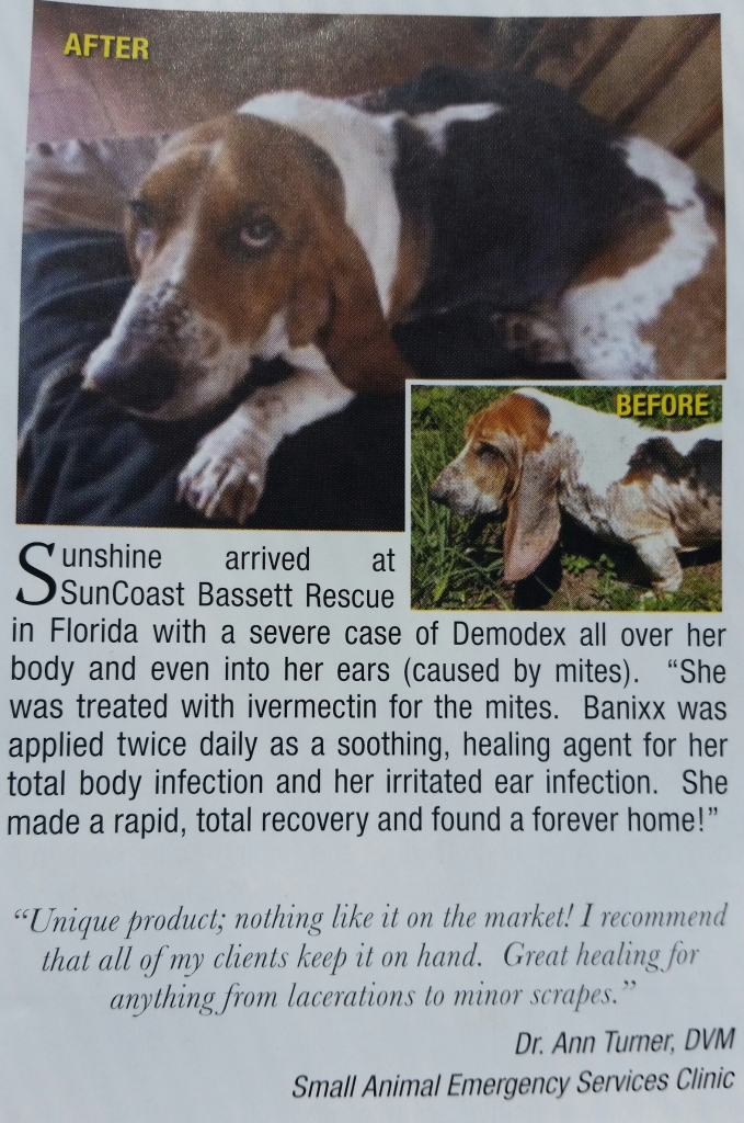 Sunshine, the Bassett Hound, suffered from Ear & Skin Infections.